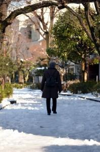 寒い冬の道